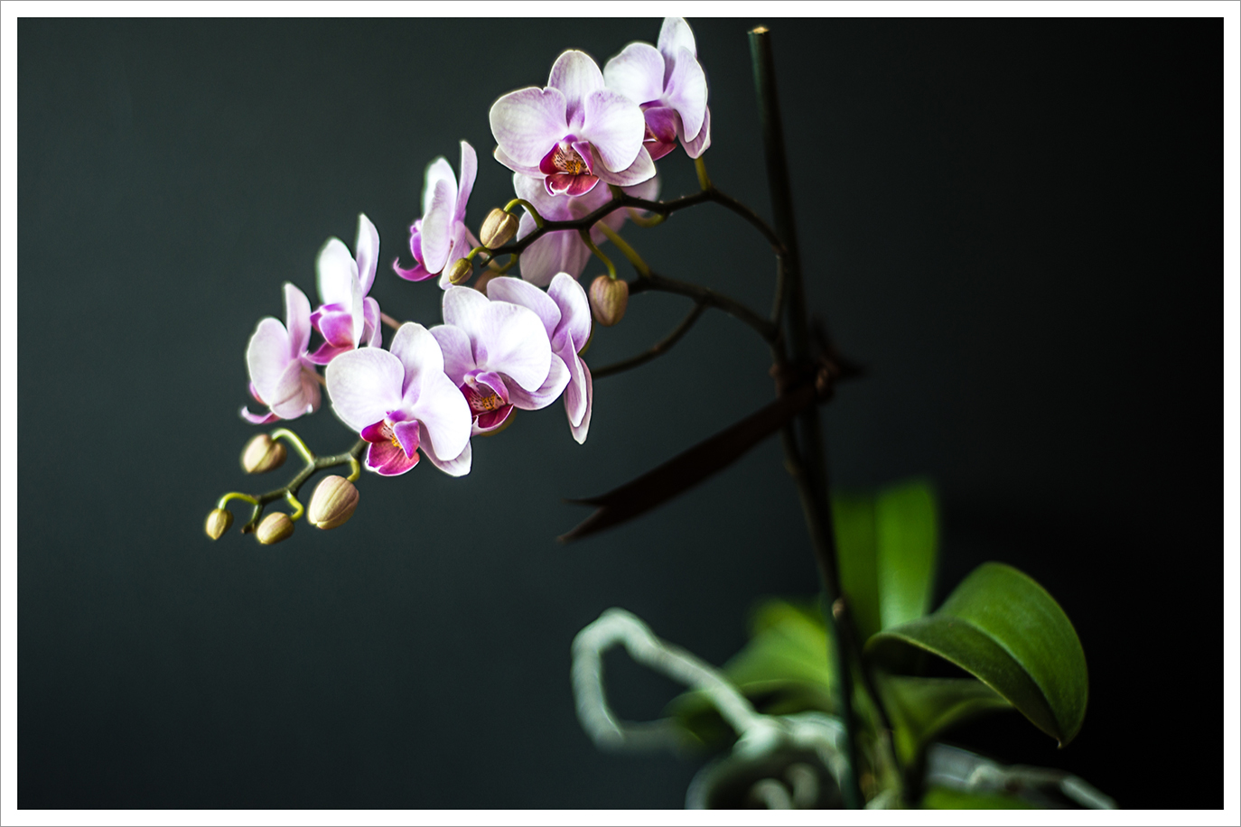 Exotic Orchid on your windowsill
